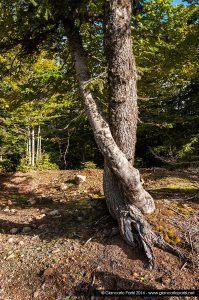 La Foresta Ferraina – sabato 1 novembre 2014