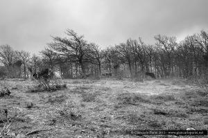 L'Aspromonte e la nebbia…