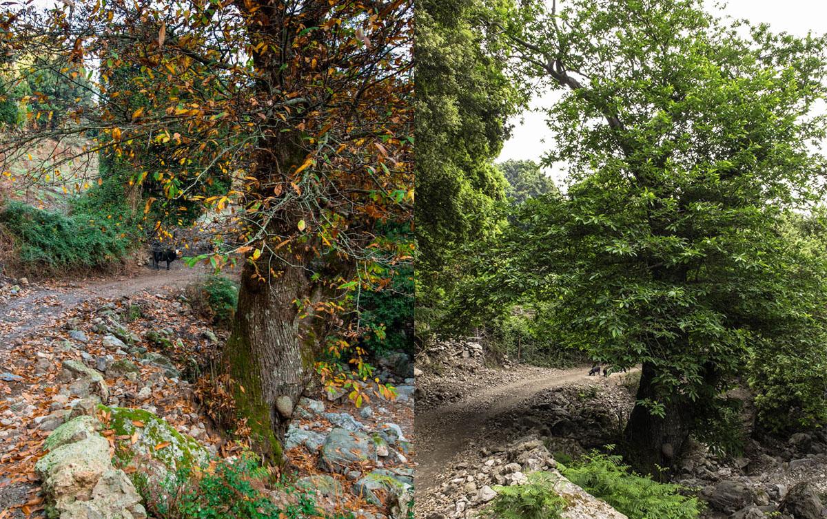 prima&dopo01